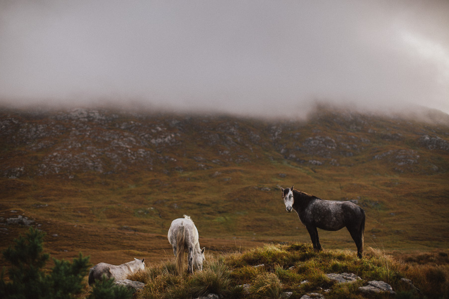 wild irish horses in Connemara galway