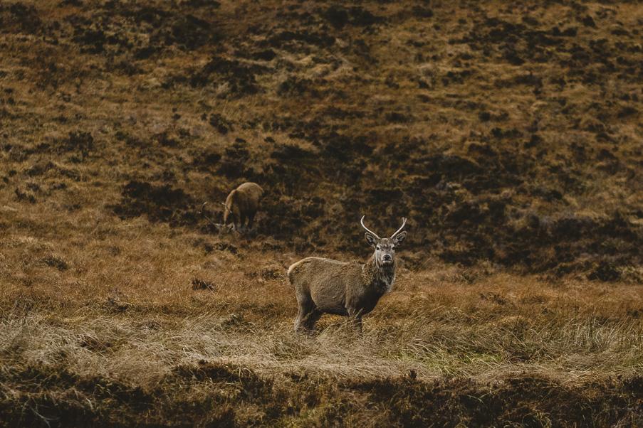scotland_adventure_photography_isle_of_skye-70